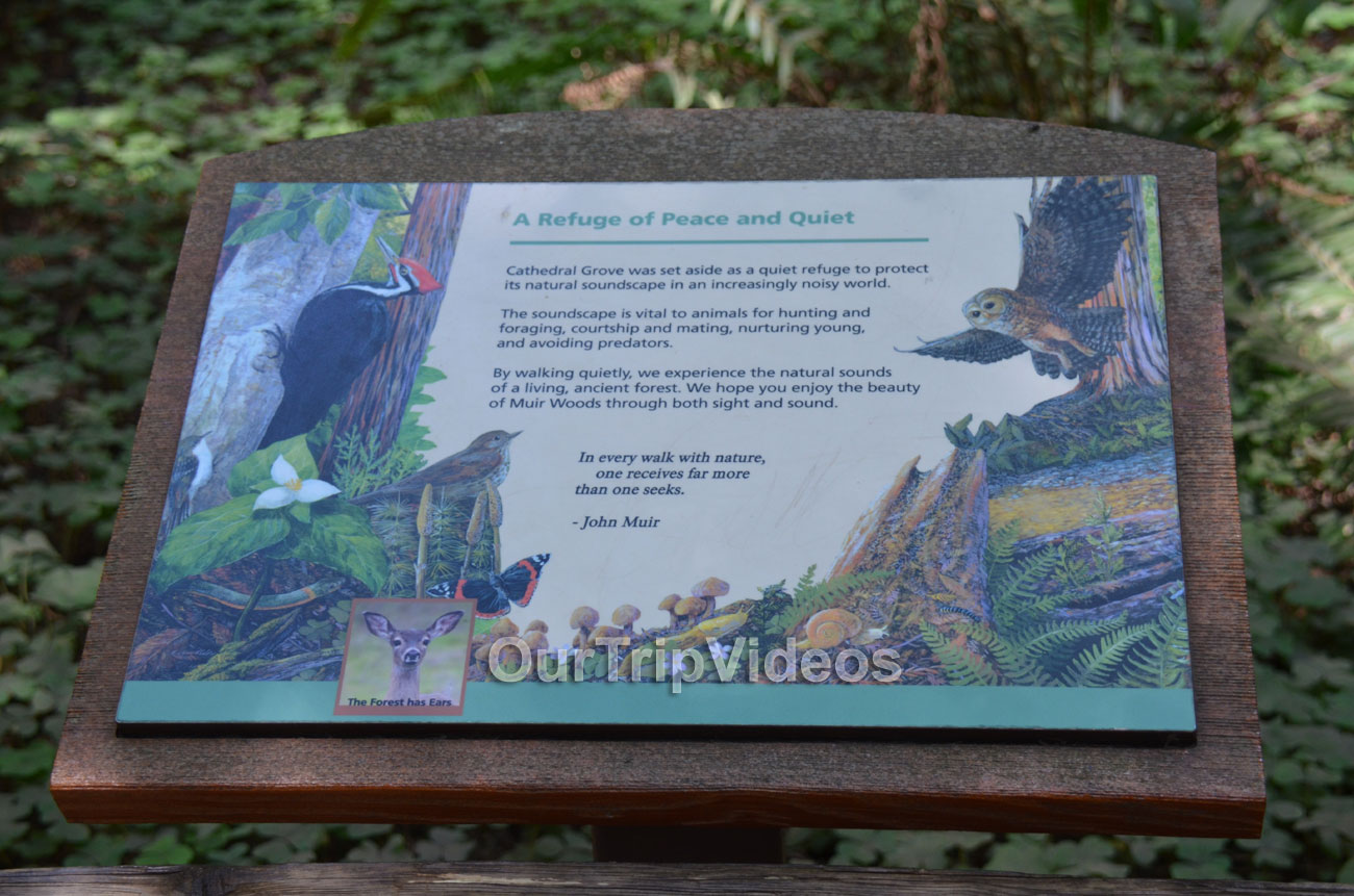 Muir Woods National Monument, Mill Valley, CA, USA - Picture 46 of 50