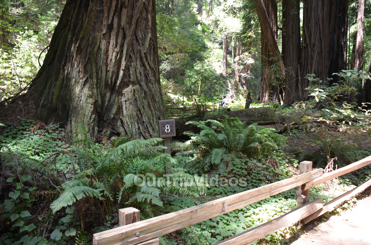 Muir Woods National Monument, Mill Valley, CA, USA - Picture 47 of 50
