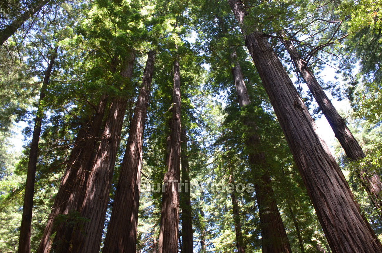 Muir Woods National Monument, Mill Valley, CA, USA - Picture 48 of 50