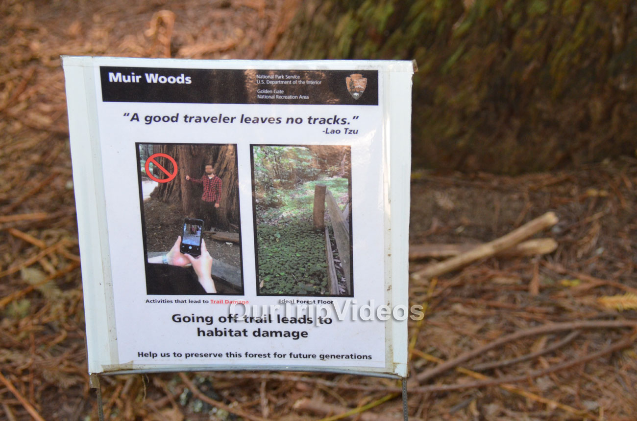 Muir Woods National Monument, Mill Valley, CA, USA - Picture 50 of 50
