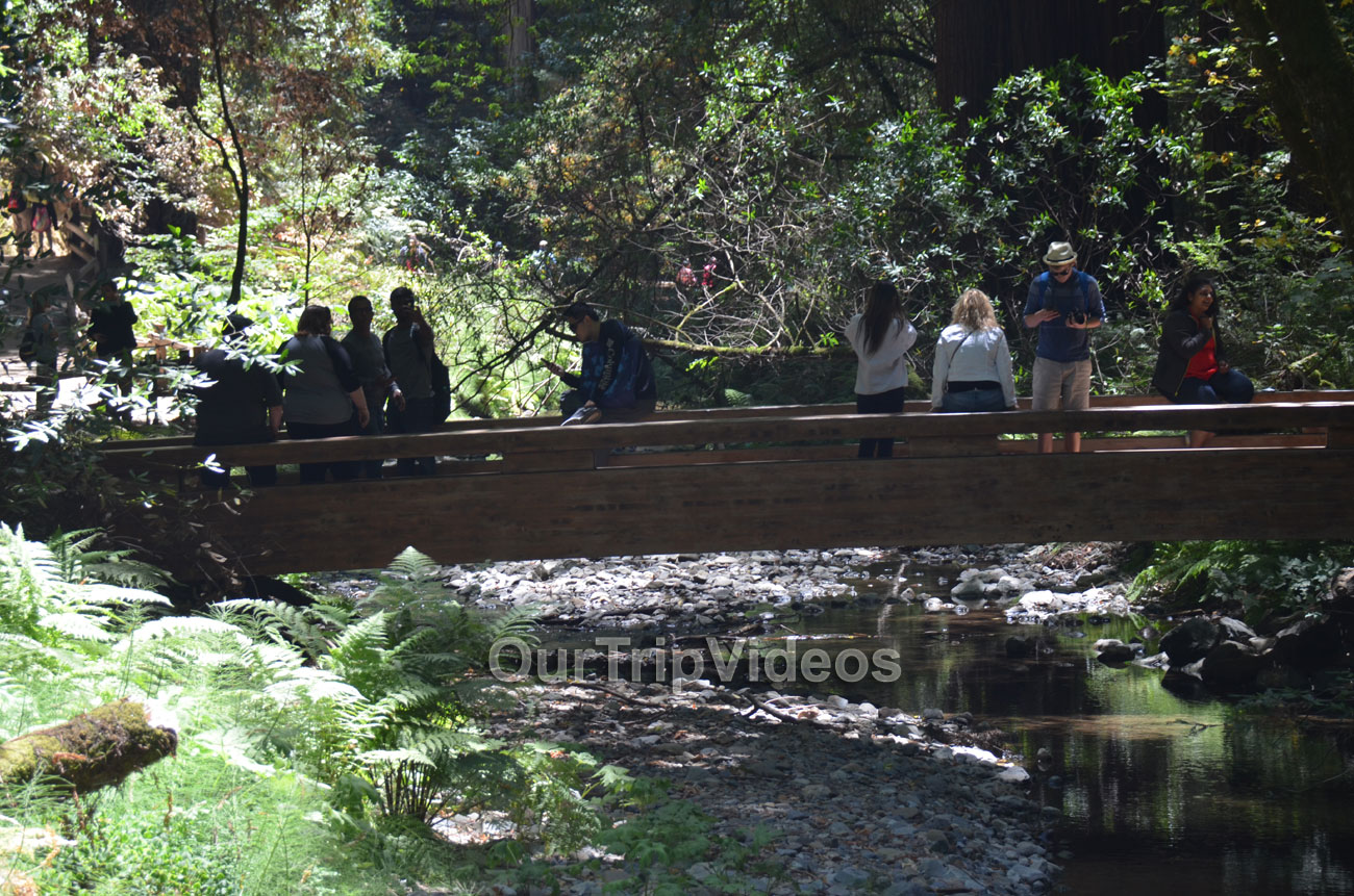 Muir Woods National Monument, Mill Valley, CA, USA - Picture 77 of 100