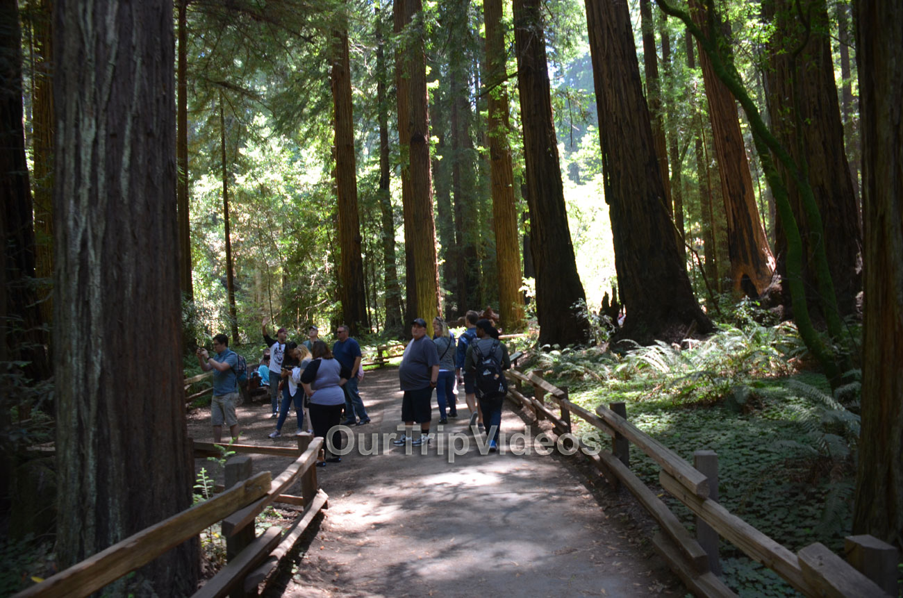 Muir Woods National Monument, Mill Valley, CA, USA - Picture 81 of 100