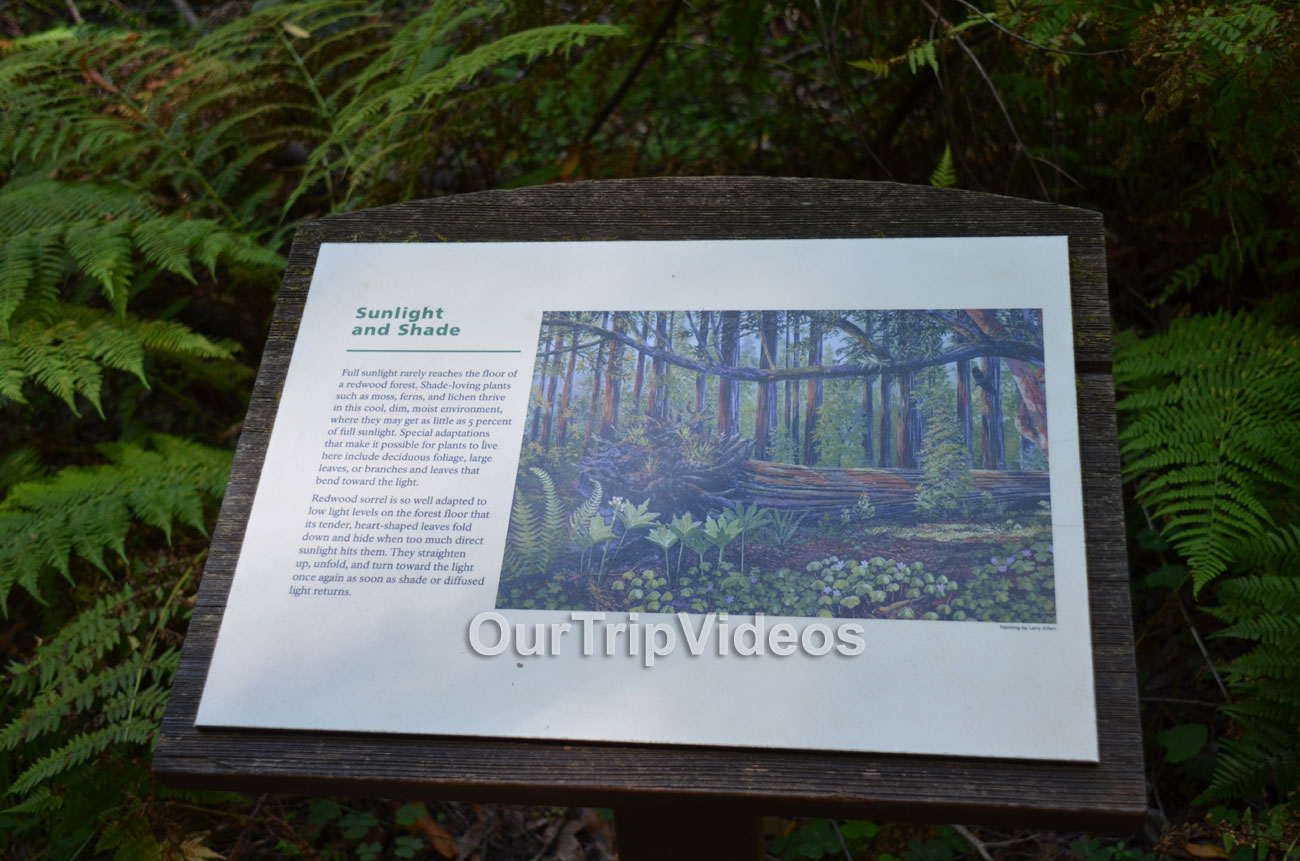 Muir Woods National Monument, Mill Valley, CA, USA - Picture 84 of 100