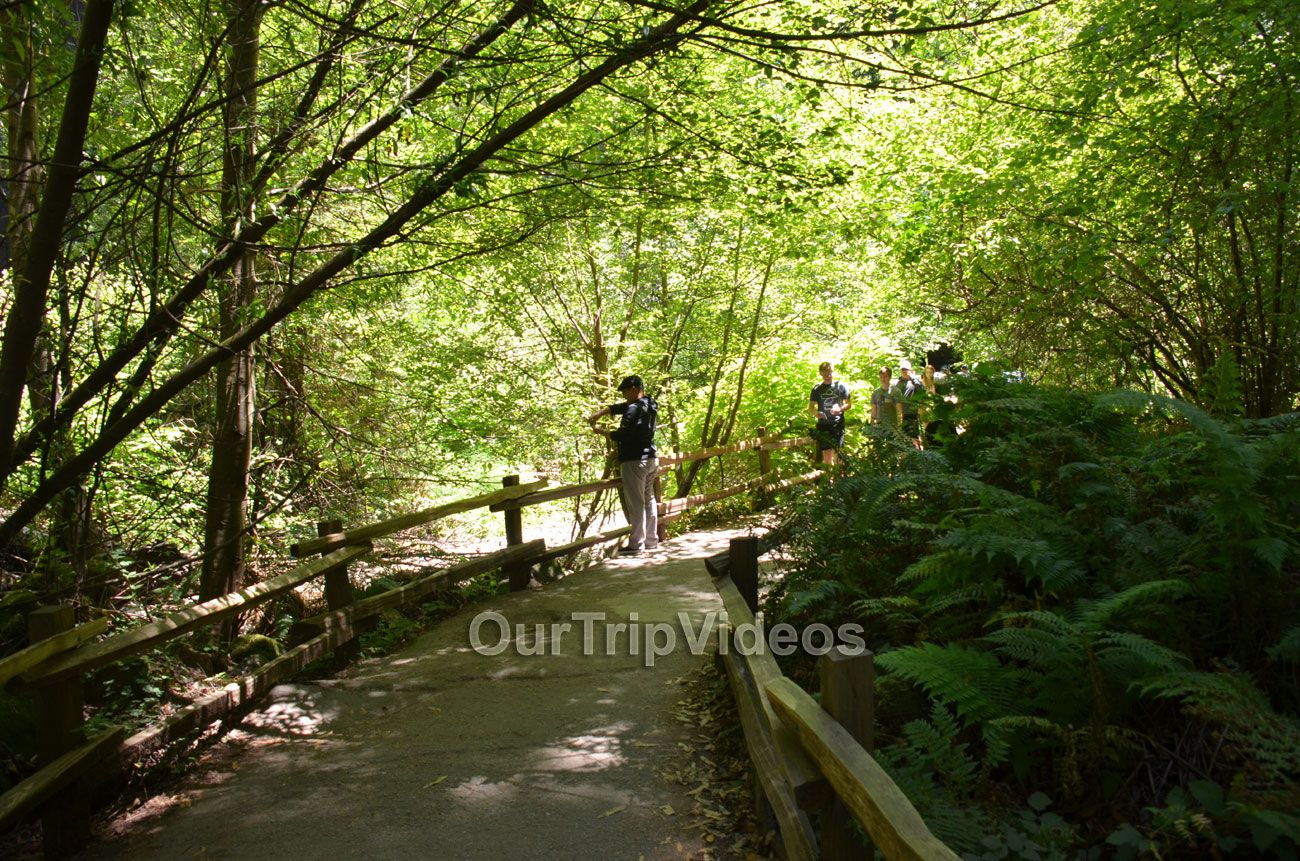 Muir Woods National Monument, Mill Valley, CA, USA - Picture 85 of 100