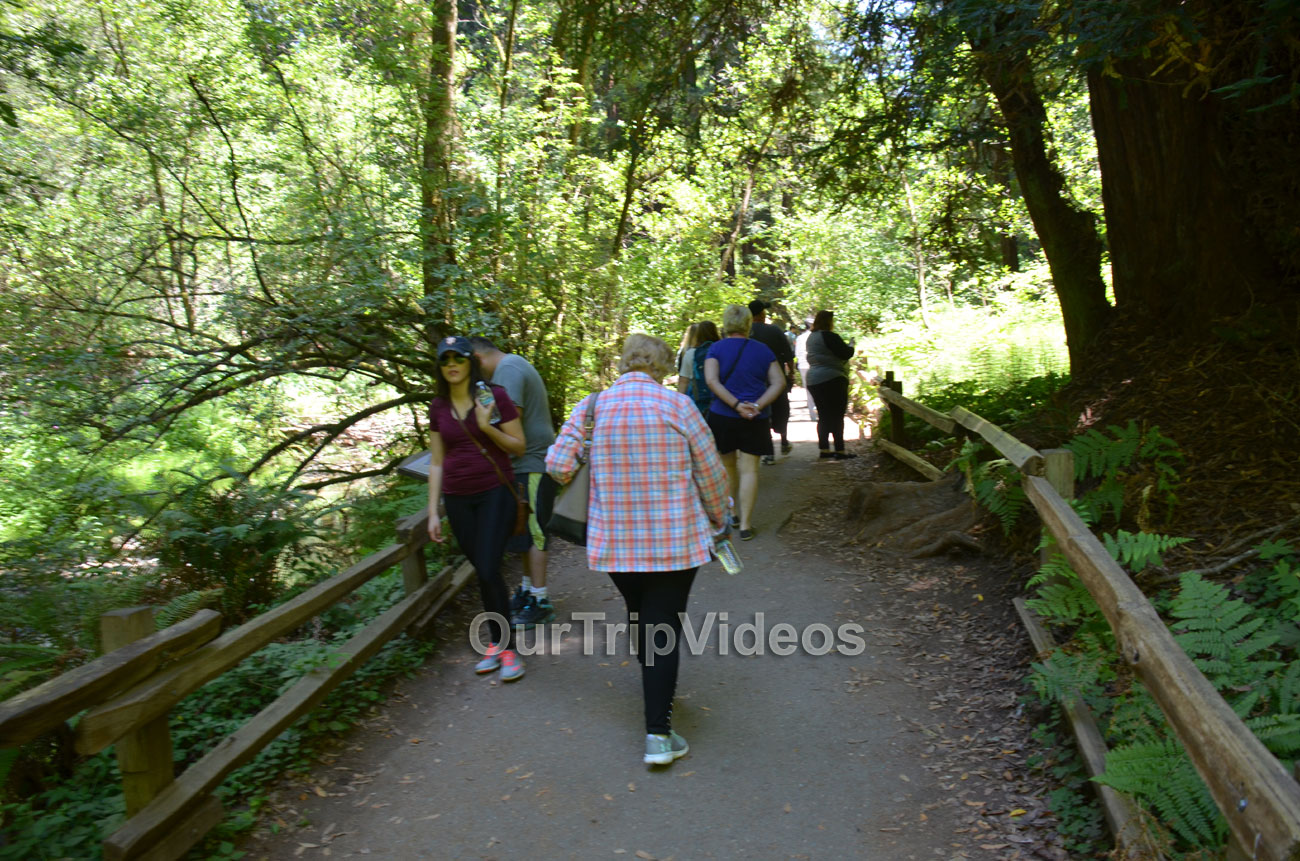 Muir Woods National Monument, Mill Valley, CA, USA - Picture 86 of 100