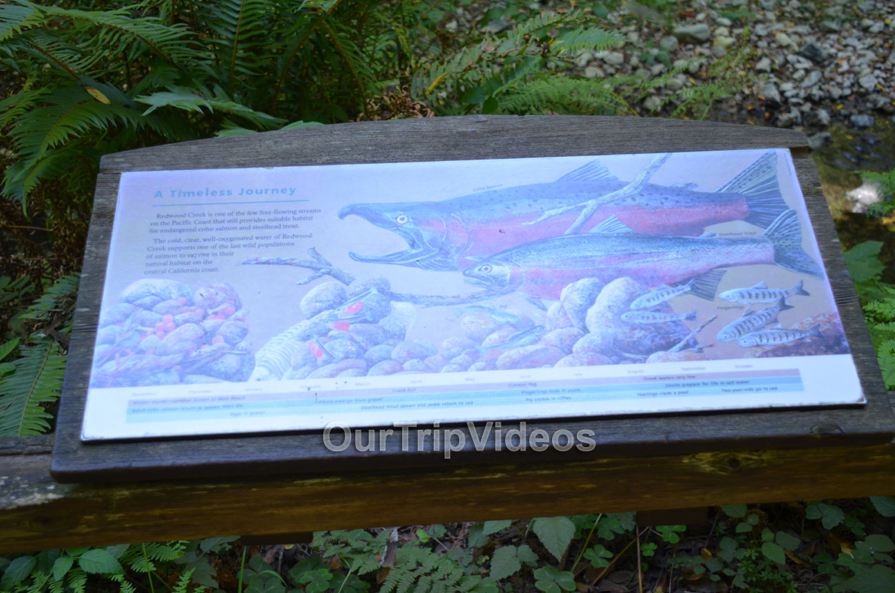 Muir Woods National Monument, Mill Valley, CA, USA - Picture 87 of 100