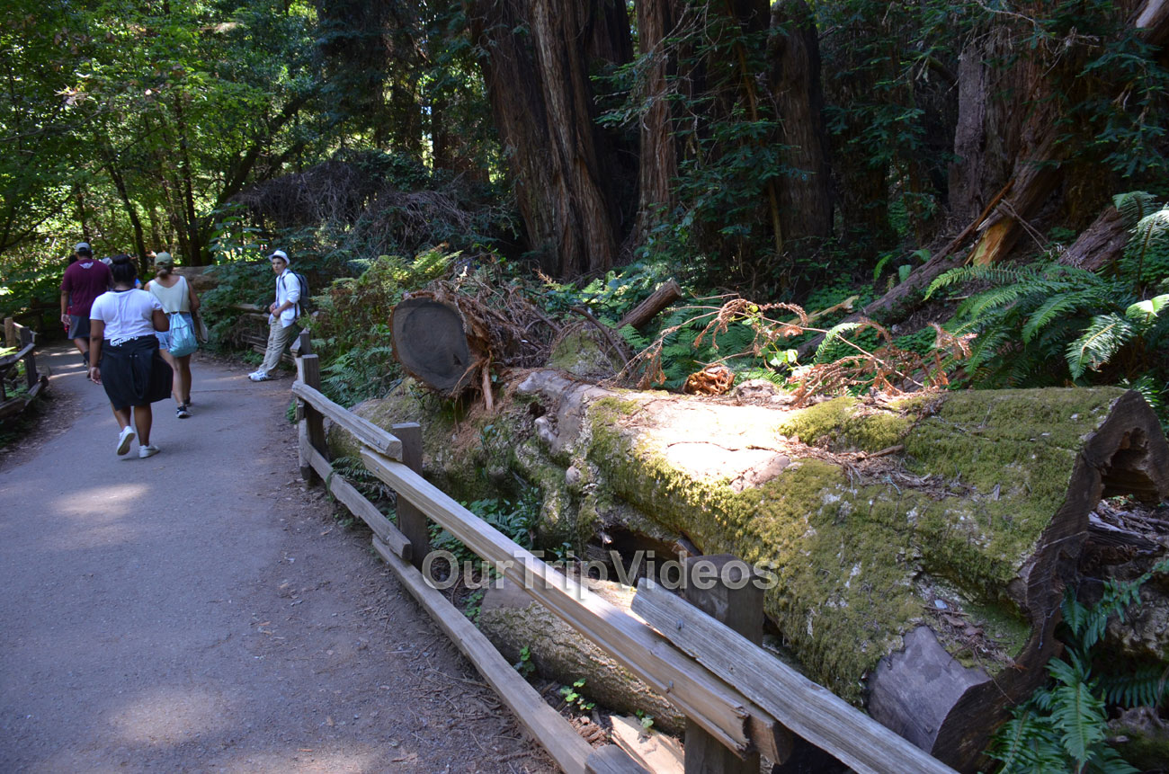 Muir Woods National Monument, Mill Valley, CA, USA - Picture 90 of 100