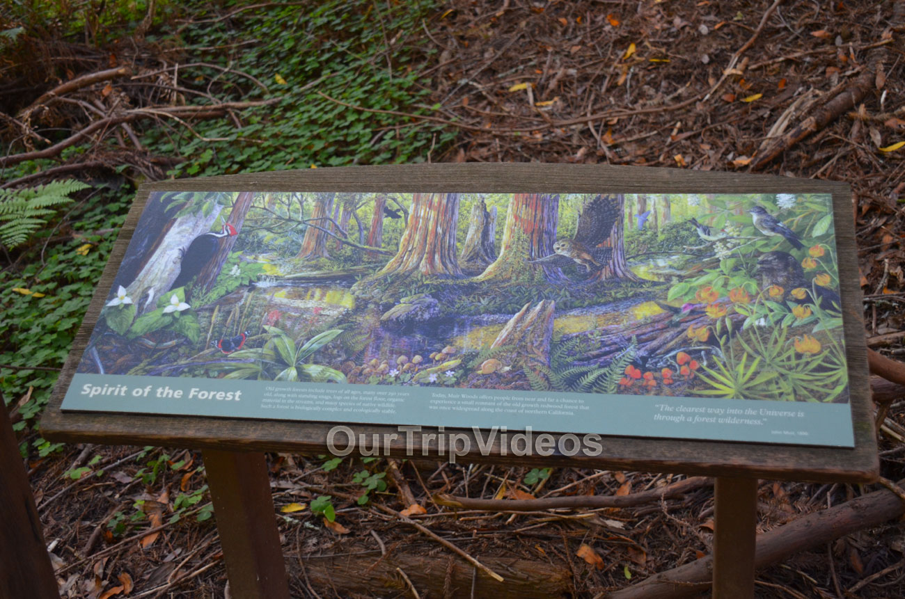 Muir Woods National Monument, Mill Valley, CA, USA - Picture 93 of 100
