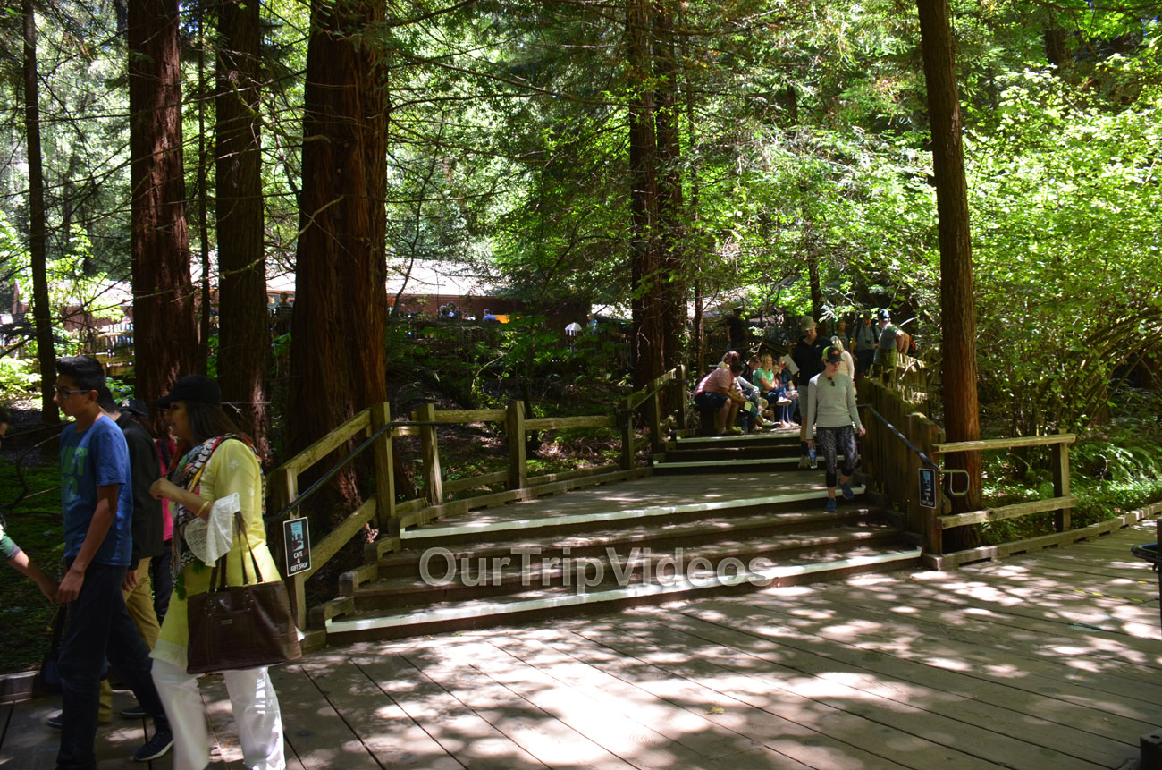Muir Woods National Monument, Mill Valley, CA, USA - Picture 94 of 100