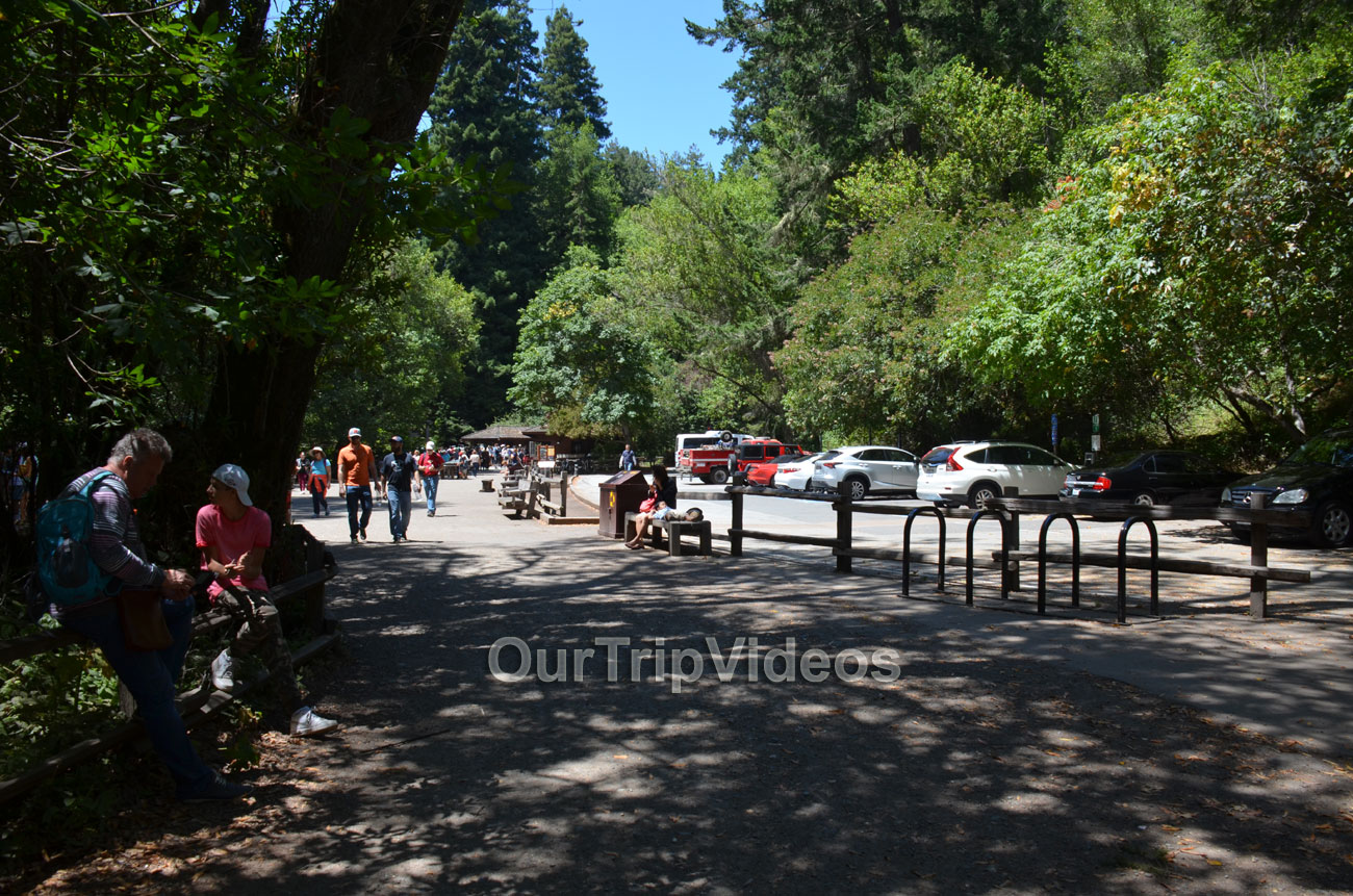 Muir Woods National Monument, Mill Valley, CA, USA - Picture 98 of 100