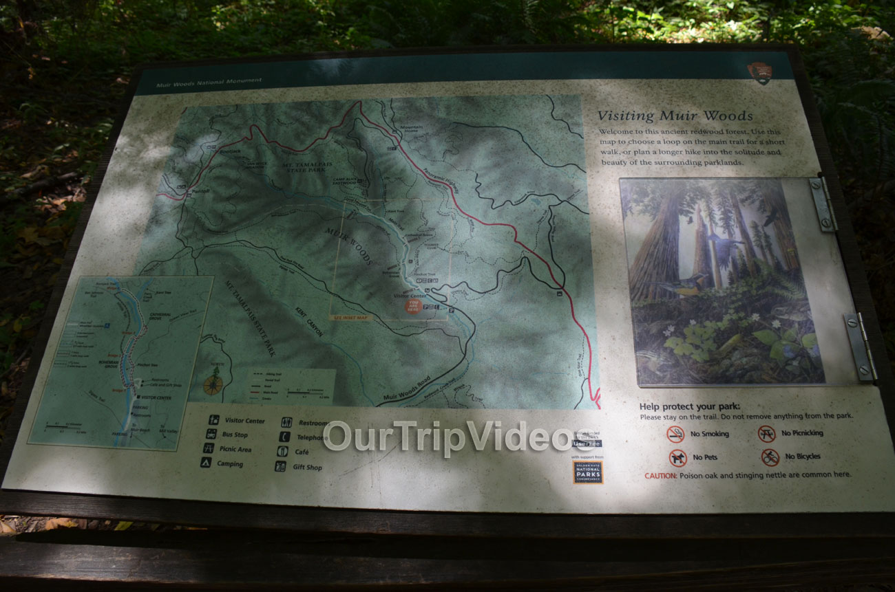 Muir Woods National Monument, Mill Valley, CA, USA - Picture 100 of 100