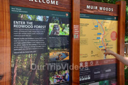 Muir Woods National Monument, Mill Valley, CA, USA - Picture 4