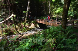 Muir Woods National Monument, Mill Valley, CA, USA - Picture 8