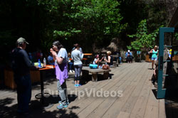 Muir Woods National Monument, Mill Valley, CA, USA - Picture 14