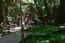 Muir Woods National Monument, Mill Valley, CA, USA - Picture 15
