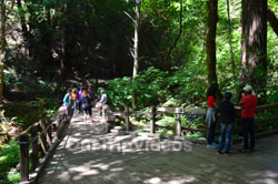 Muir Woods National Monument, Mill Valley, CA, USA - Picture 16