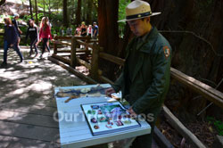 Muir Woods National Monument, Mill Valley, CA, USA - Picture 18