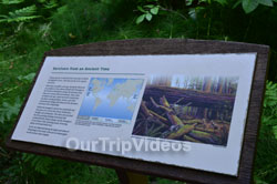 Muir Woods National Monument, Mill Valley, CA, USA - Picture 20