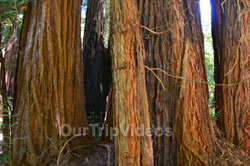 Muir Woods National Monument, Mill Valley, CA, USA - Picture 21