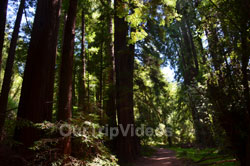 Muir Woods National Monument, Mill Valley, CA, USA - Picture 24