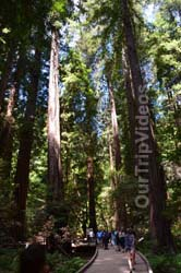 Muir Woods National Monument, Mill Valley, CA, USA - Picture 25
