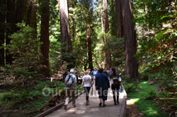 Muir Woods National Monument, Mill Valley, CA, USA - Picture 26
