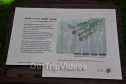 Muir Woods National Monument, Mill Valley, CA, USA - Picture 27