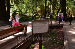 Muir Woods National Monument, Mill Valley, CA, USA - Picture 29