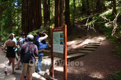 Muir Woods National Monument, Mill Valley, CA, USA - Picture 30