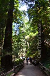 Muir Woods National Monument, Mill Valley, CA, USA - Picture 32