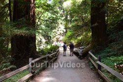 Muir Woods National Monument, Mill Valley, CA, USA - Picture 33