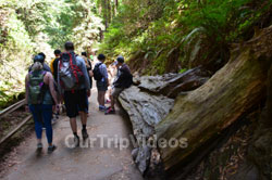 Muir Woods National Monument, Mill Valley, CA, USA - Picture 34