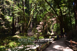 Muir Woods National Monument, Mill Valley, CA, USA - Picture 36