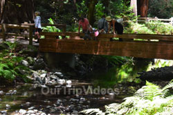 Muir Woods National Monument, Mill Valley, CA, USA - Picture 37