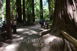 Muir Woods National Monument, Mill Valley, CA, USA - Picture 39
