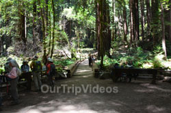 Muir Woods National Monument, Mill Valley, CA, USA - Picture 40