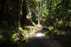 Muir Woods National Monument, Mill Valley, CA, USA - Picture 41