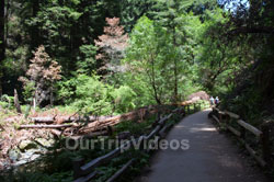 Muir Woods National Monument, Mill Valley, CA, USA - Picture 43