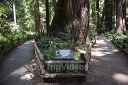 Muir Woods National Monument, Mill Valley, CA, USA - Picture 45