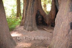 Muir Woods National Monument, Mill Valley, CA, USA - Picture 49