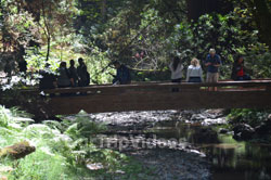 Muir Woods National Monument, Mill Valley, CA, USA - Picture 77