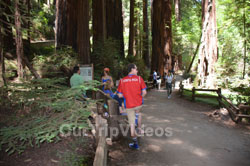 Muir Woods National Monument, Mill Valley, CA, USA - Picture 80