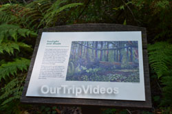 Muir Woods National Monument, Mill Valley, CA, USA - Picture 84