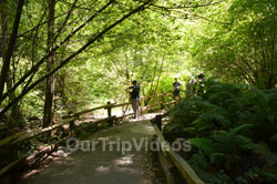 Muir Woods National Monument, Mill Valley, CA, USA - Picture 85