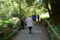 Muir Woods National Monument, Mill Valley, CA, USA - Picture 86