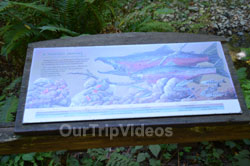 Muir Woods National Monument, Mill Valley, CA, USA - Picture 87