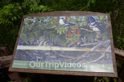 Muir Woods National Monument, Mill Valley, CA, USA - Picture 88