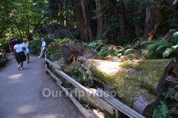 Muir Woods National Monument, Mill Valley, CA, USA - Picture 90