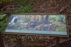 Muir Woods National Monument, Mill Valley, CA, USA - Picture 93