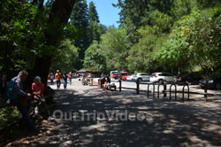 Muir Woods National Monument, Mill Valley, CA, USA - Picture 98